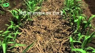 Parijat Sugarcane Tutorial (Hindi)