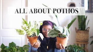 POTHOS | TYPES AND CARE TIPS | HOUSEPLANTS