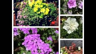 ✿ The Ultimate Guide To Flowers