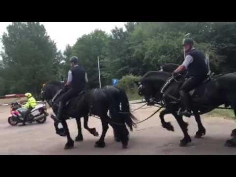 Royal horses leaving parade practice in De Hague