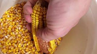 Where's the Dry Corn? - #274