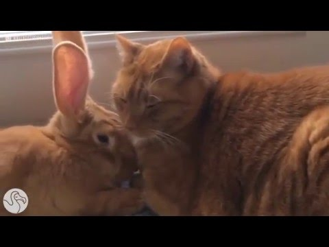 Wallace the Wabbit & Gus the Cat