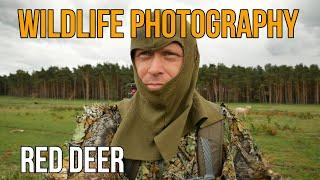 Wildlife Photography Behind The Scenes - Wild Red Deer