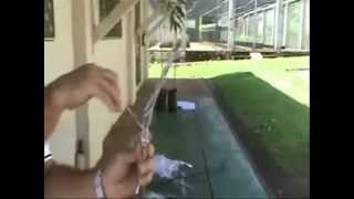 Instruções para enxertia em videiras (Fenda Cheia) - ESALQ/USP