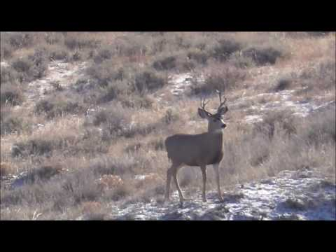 Repeat NM Rifle Mule Deer Backpack Hunt by Master The Hunt