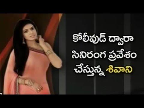 సినిమాల్లోకి రాజశేఖర్ కూతురు..? | Jeevitha Rajasekhar Daughter Entry Into Films | Nijam | TV5 News