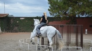 Working equitation at Haras do Castanheiro in Brazil with Marijke de Jong
