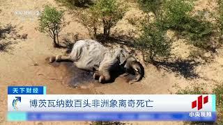 离奇!非洲数百头大象接连死亡 死前反复绕圈| CCTV中文国际
