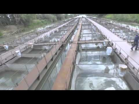 Страна труда. Рыбовод рыбного хозяйства
