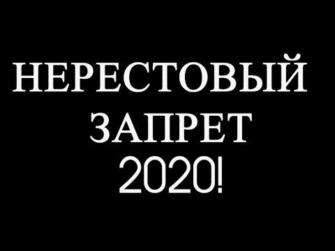 Нерестовый запрет 2020 подробно. Рыбалка на спиннинг в запрет.Закон о рыбалке. Сроки нереста 2020.