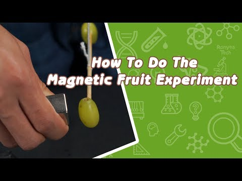 Magnetic Fruit - Science Experiment for Kids