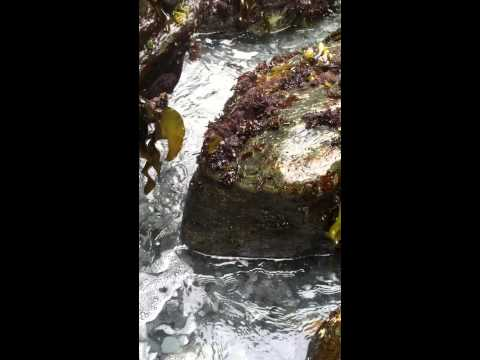 Tidal action over medium sized stones