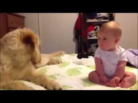 Videos de Bebés bailando Graciosos