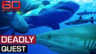 Daring scientist jumps on the back of giant sharks | 60 Minutes Australia