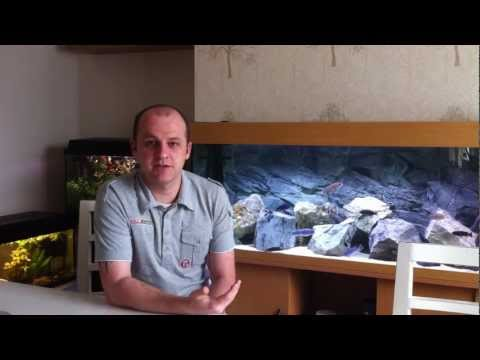 How To Breed African Cichlids - Breeding Tips and Tricks