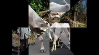 """""""LA CARRETA"""", con LOS FOLKLORISTAS y JOSE LUIS BELMAR-video"""