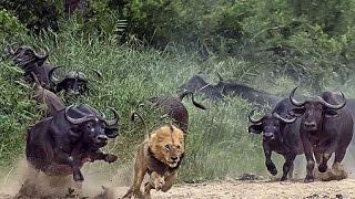 Cамые восстребованные животные Сафари Документальный фильм 2017 hd