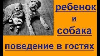 Поведение в гостях. Общение ребенка с собакой.