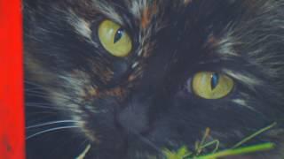 Кошкина мордочка крупным планом морда кошки крупно