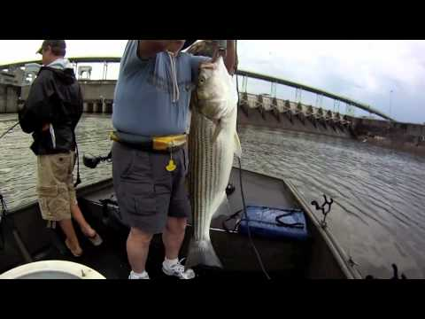 Tn river striper fishing 2011 youtube for Wilson river fishing report