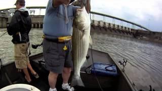 TN River Striper Fishing 2011