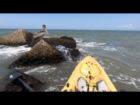 Saved a pelican at the Jetty rocks
