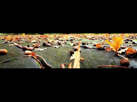 Fall Panorama: Point and Shoot November 5, 2015