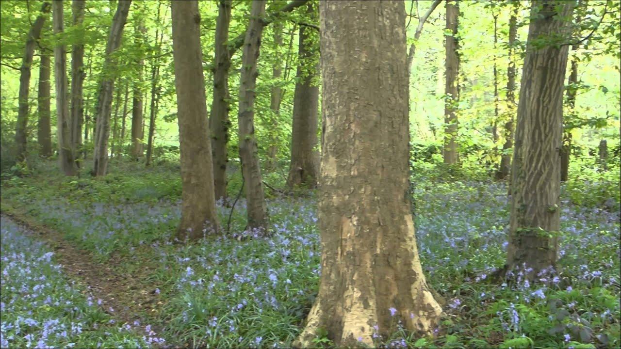 Sous bois fleuri au Bois de la Provision YouTube # La Soissonnaise Des Bois