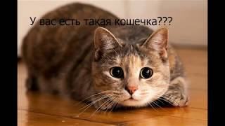 Как дать таблетку кошке! How can we give remedy to your pet!