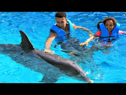 Thumbnail: Kids Dolphin Ride - Swimming With Dolphins Family Fun Video In Mexico | Toys AndMe