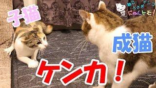 NyanTomoサブちゃんねる(すみちゃんNyanTomo) https://www.youtube.co...