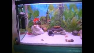 how to care your pet fish  urdu/hindi