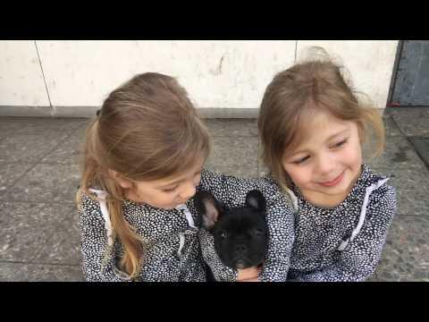 Zwillinge und Welpe - Hast du nicht schon genug um die Ohren?