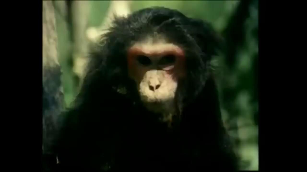 Tarzan X Full EROTIC MOVIES