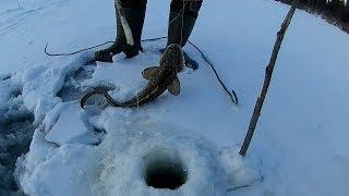 Проверка поставух на налима ноябрь 2017.  Ловля налима зимой в Томской области.