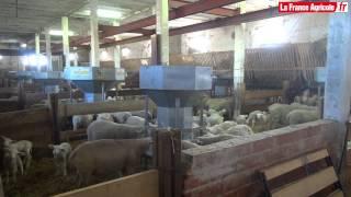 Elevage ovin : Automatiser pour réduire le travail d'astreinte