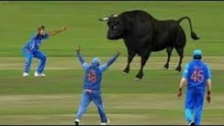 जब क्रिकेट मैदान में घुसे खतरनाक जानवर // Animals enter in cricket Match