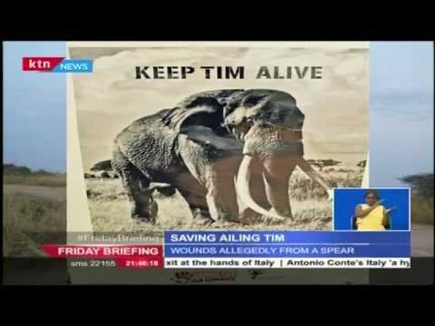 Saving Kenya's oldest Elephant, Tim from poachers at the Amboseli National Park