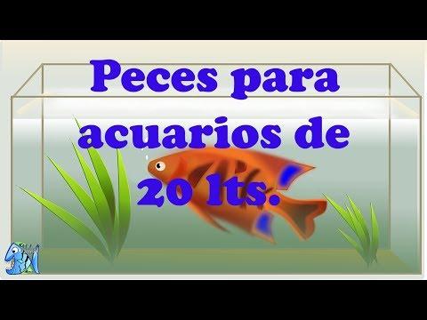 Peces para acuario
