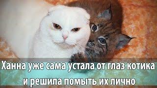 Рысь моет кота