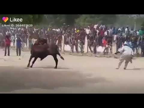 Download Nigerian/Hausa cultural festival