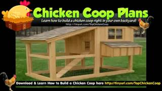 Pvc Chicken Coop - Free Chicken Coop Plan