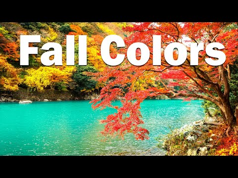 Jazzy Beats 🍂 Fall Colors - Lofi Hip Hop Jazz Music to Relax, Study, Work and Chill