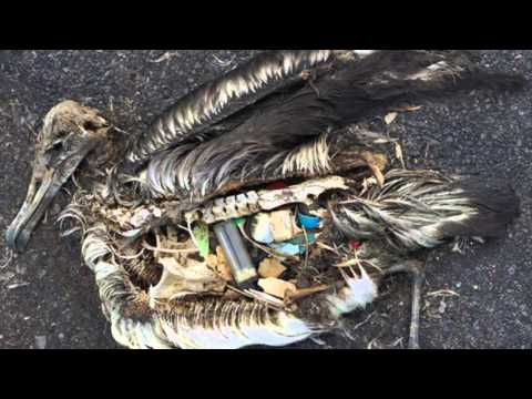 The Impacts of Plastic: The Great Atlantic Garbage Patch