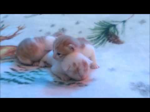 cute 10 day old kittens playing :)