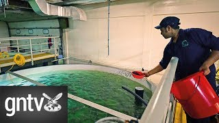 Farmed salmon to go on sale as UAE ramps up food security plan