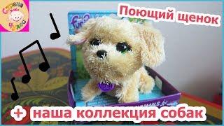 ОБЗОР Интерактивная игрушка FurReal Friends Поющий щенок