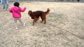 初めて女の子と遊ぶヴィッツです!