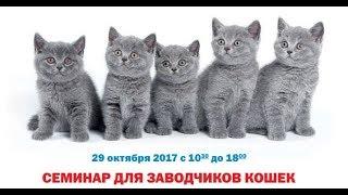 Острый конъюнктивит у кошек. Семинар для заводчиков.