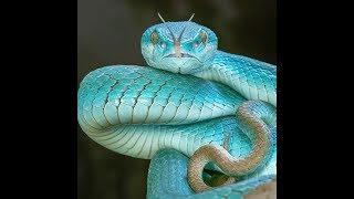 Самые красивые змеи мира. Животный мир.  Красивые фото.